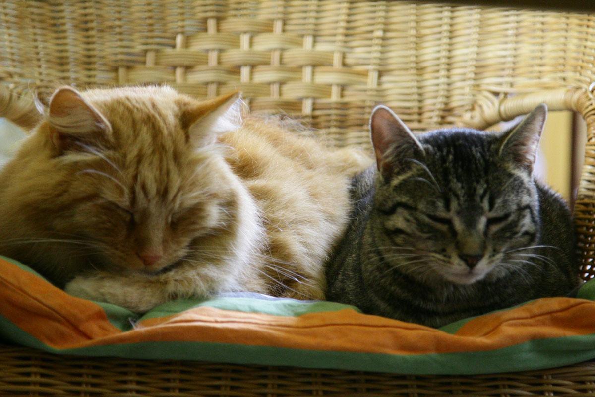 verj ngungskur katzenschutzbund e v cat sitter club essen. Black Bedroom Furniture Sets. Home Design Ideas
